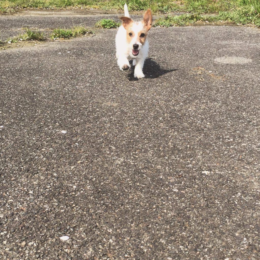 はじめてのお散歩
