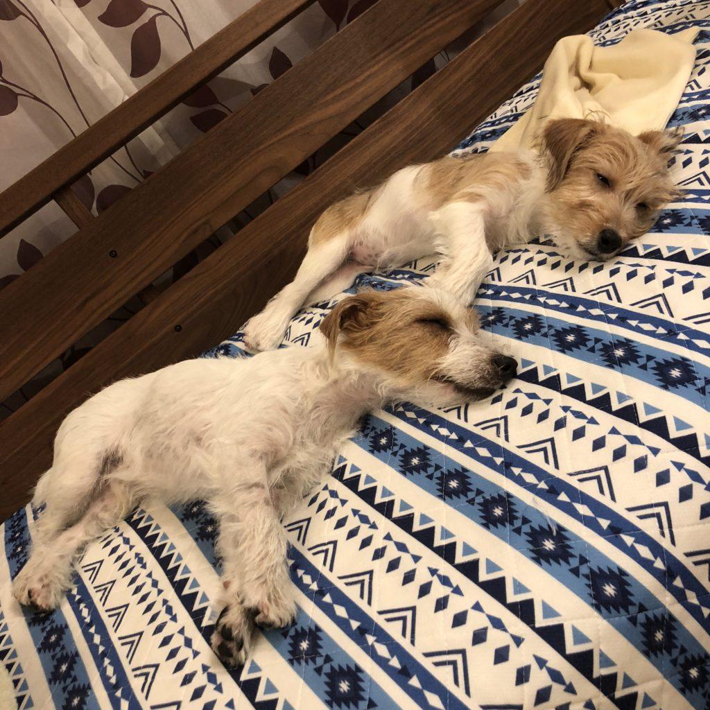 一緒に眠る2匹