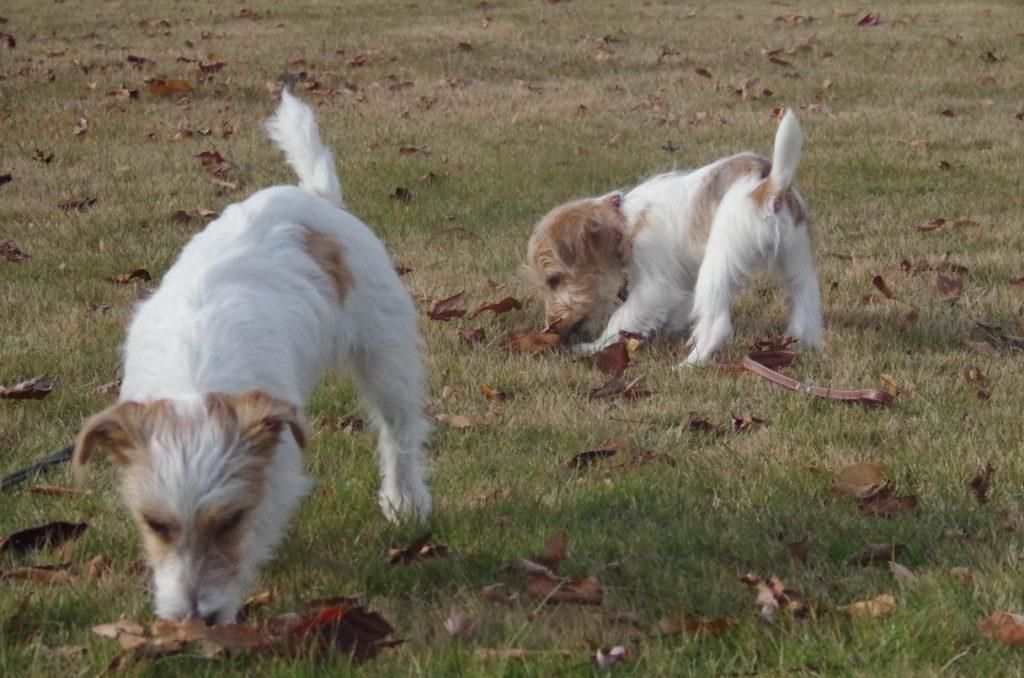 公園を散策する2匹