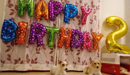 ヴィッキー2歳の誕生日